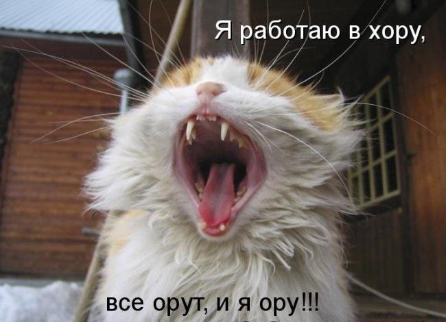 Анекдоты про мартовских котов