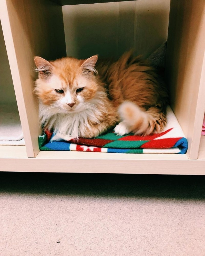 Кот вернулся домой, где его никто не ждал
