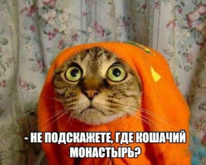 ПОЗИТИВНЫЙ КОТОПОСТ)