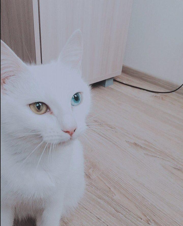 Беременная глухая кошка с Ав…