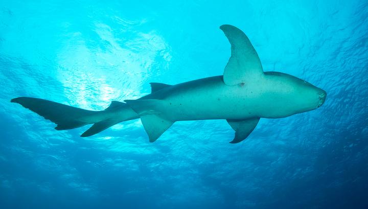 На северо-востоке Австралии акула атаковала серфера