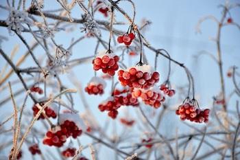 Москвичей на следующей неделе ожидают морозы