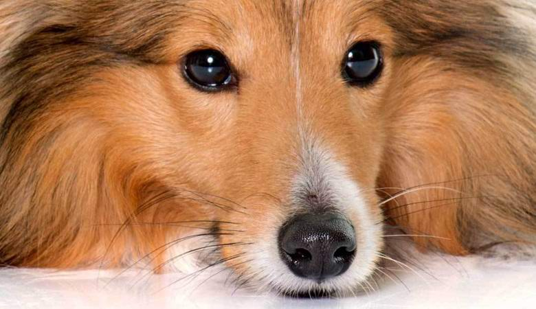 «Мой пес пропадал три дня. То, что вернулось назад, им уже не было»