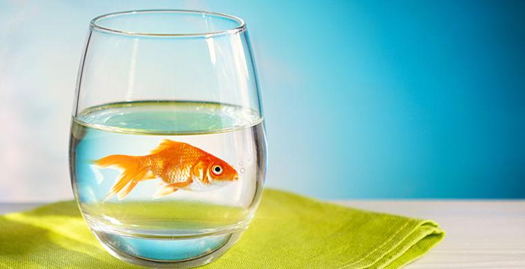 Бельгийский отель предложил одиноким гостям золотую рыбку в аренду