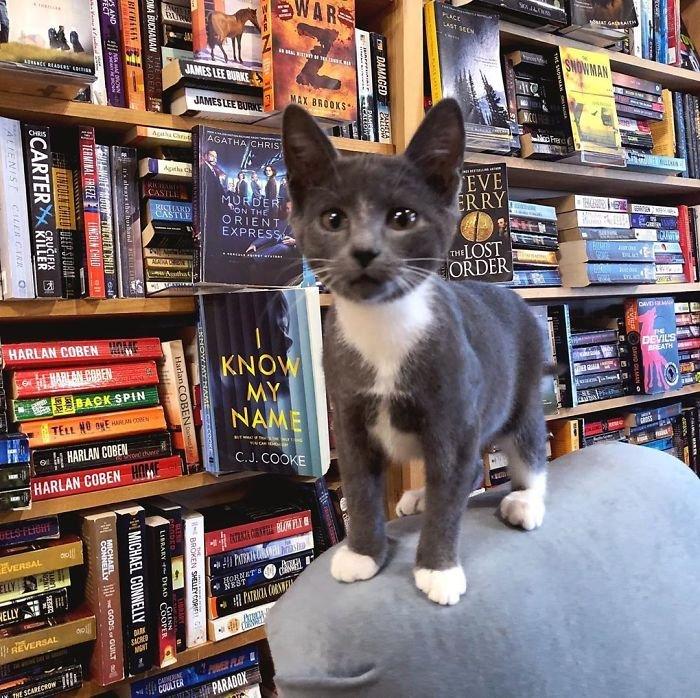 Канадский книжный магазин, в котором много кошек