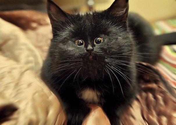 Коты с крошечными мордочками