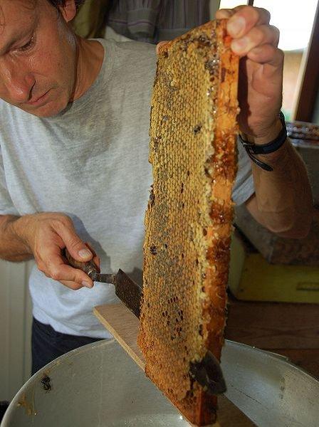 Продукты пчеловодства. Забрус – подарок пчел