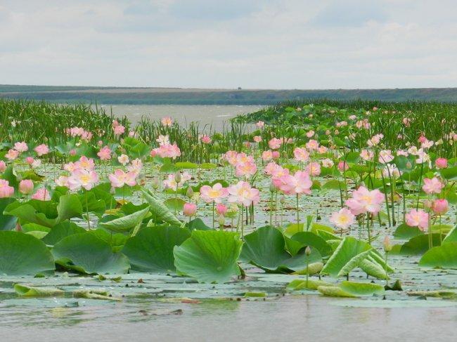 Достопримечательности Краснодарского края (15 фото)