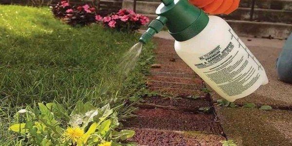 Осенью лучше вовсе не использовать химию   Сад-огород