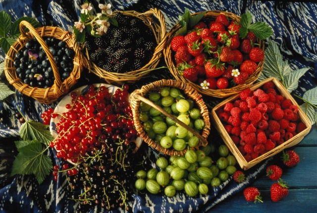Вот как с помощью удобрений удвоить урожаи ягодных кустарников