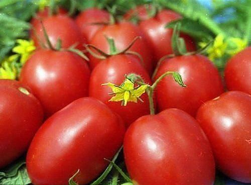 Подкармливать помидоры