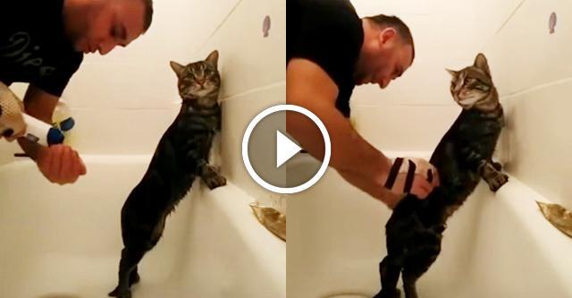 Хозяин купает самого терпеливого кота в мире