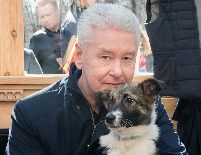 Звезды делают выбор в пользу беспородных собак