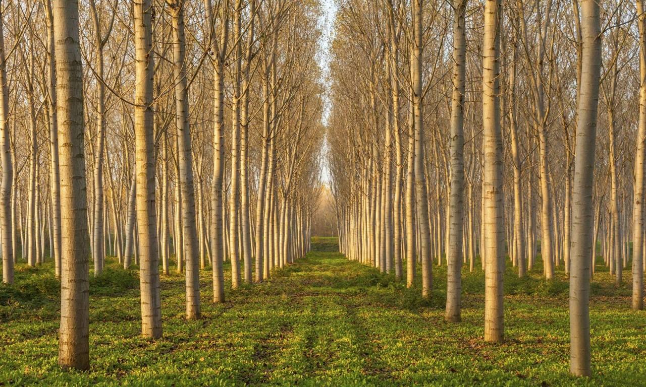 Лес за неделю - запретить ученым такие эксперименты