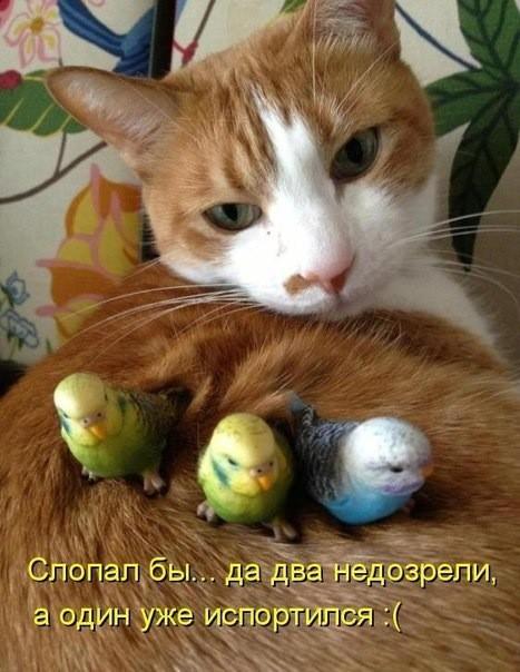Для тех, у кого случилось плохое настроение — очумелая порция кошачьего позитива!