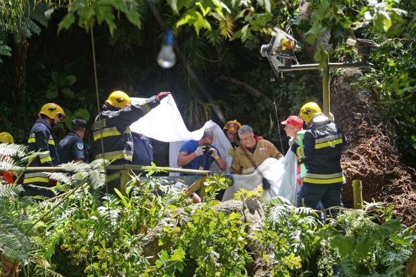 200-летний дуб-долгожитель на Мадейре упал и убил 13 человек