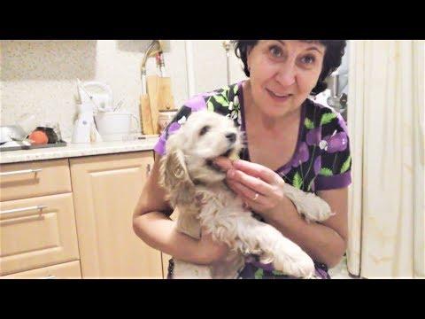 Приколы с Животными 2018 Собаки и Сосиски Смешные Видео про Собак Funny Dogs and Sausages