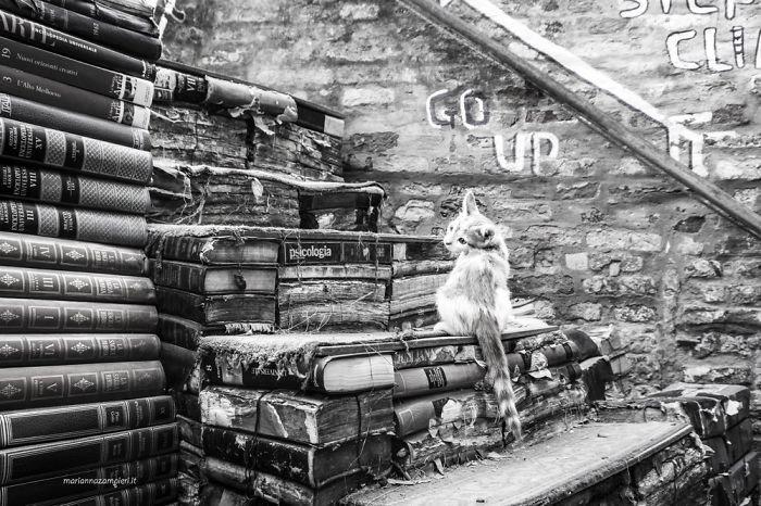 3. Зигги в книжном магазине домашние животные, коты, кошка, кошка в магазине, кошки, фотопроект, черно-белая фотография, черно-белое фото