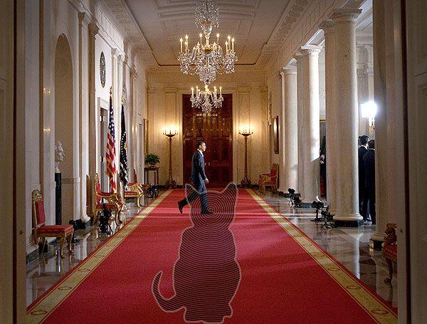 Демонический кот из Белого дома