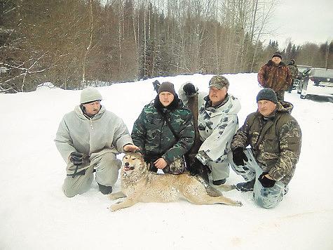 Матерый волк вызволял всю ночь из плена волчицу