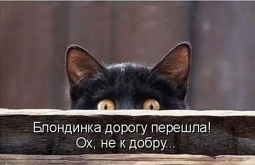 БЛОНДИНКА ДОРОГУ ПЕРЕШЛА! ОХ, НЕ К ДОБРУ!!! УЛЫБНЕМСЯ)))