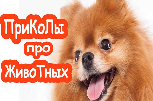 Приколы про животных. Собаки от тоски спасаки