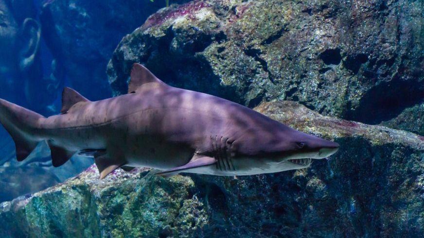 Самые необычные виды акул и …