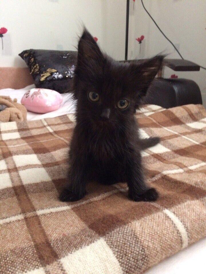 Я увидела тощую и грязную малышку, точную копию моей бывшей кошки...