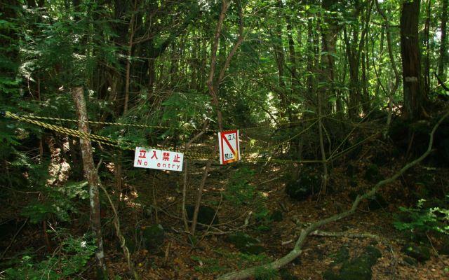 Аокигахара. Самые страшные места на планете. Просто жуть (фото и видео)