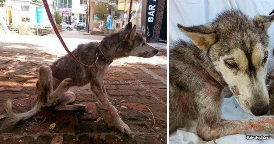 Умирающая собака прятала под животом ещё одну жизнь