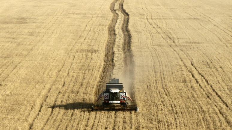 France Info: Россия потеснила Францию на африканском рынке пшеницы