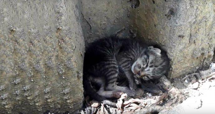 Одинокий котенок спал посреди улицы и мечтал о теплом доме… Спасение очаровательного котёнка