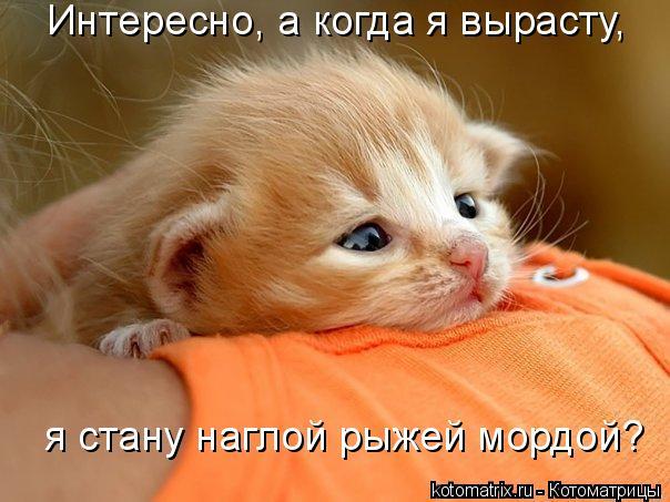 Позитивные кошачьи фотки, ко…