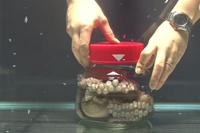 Что будет, если осьминога закрыть в банке и как справляются с трудностями другие умные животные