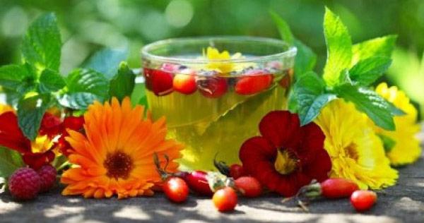 Лечебные чаи из лекарственных растений