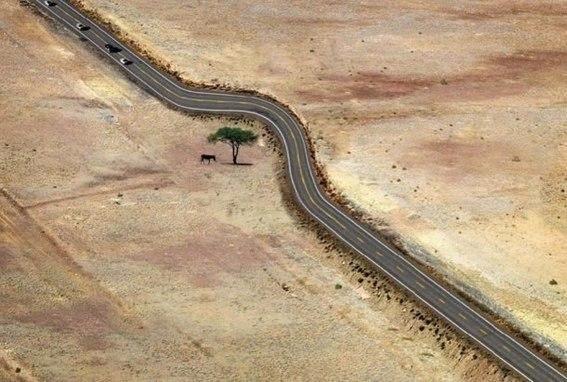 10 примеров того, как нужно относиться к природе