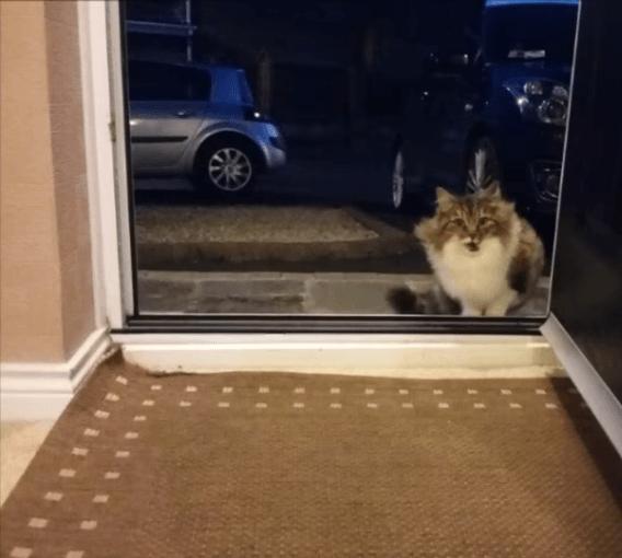 Вечерний гость попросился переночевать в доме… Парень даже не думал, к каким последствиям это приведет
