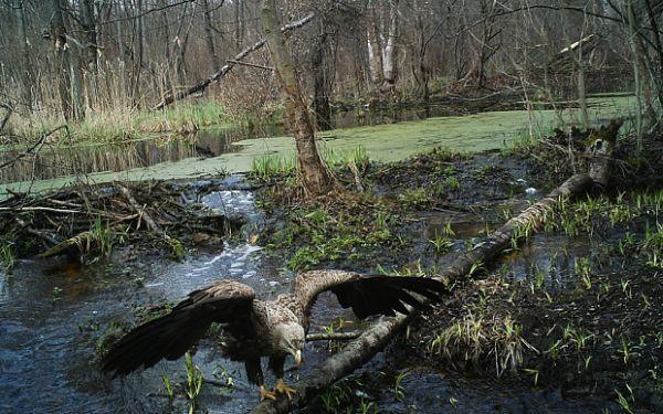 Чернобыльский лес