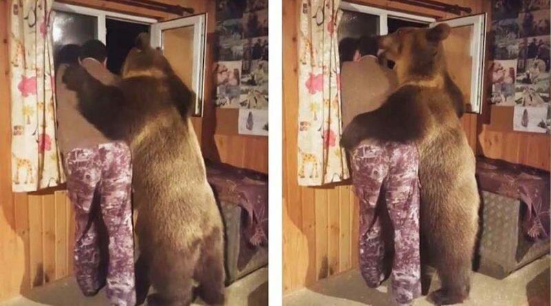 Красивый одомашненный  медведь, который неплохо устроился
