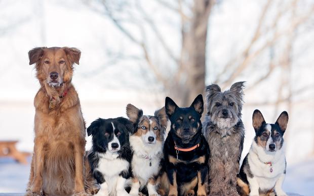 Психологи доказали: порода собаки может многое рассказать о ее хозяине