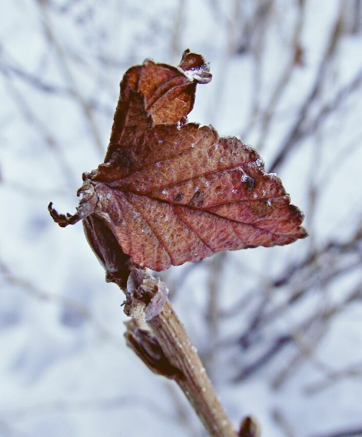 Одинокий листок