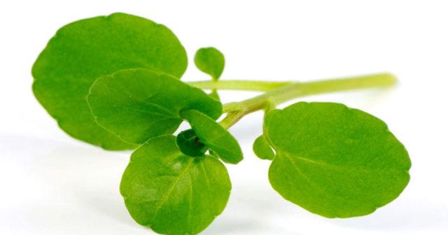 Полезное растение, которое легко можно вырастить на подоконнике!