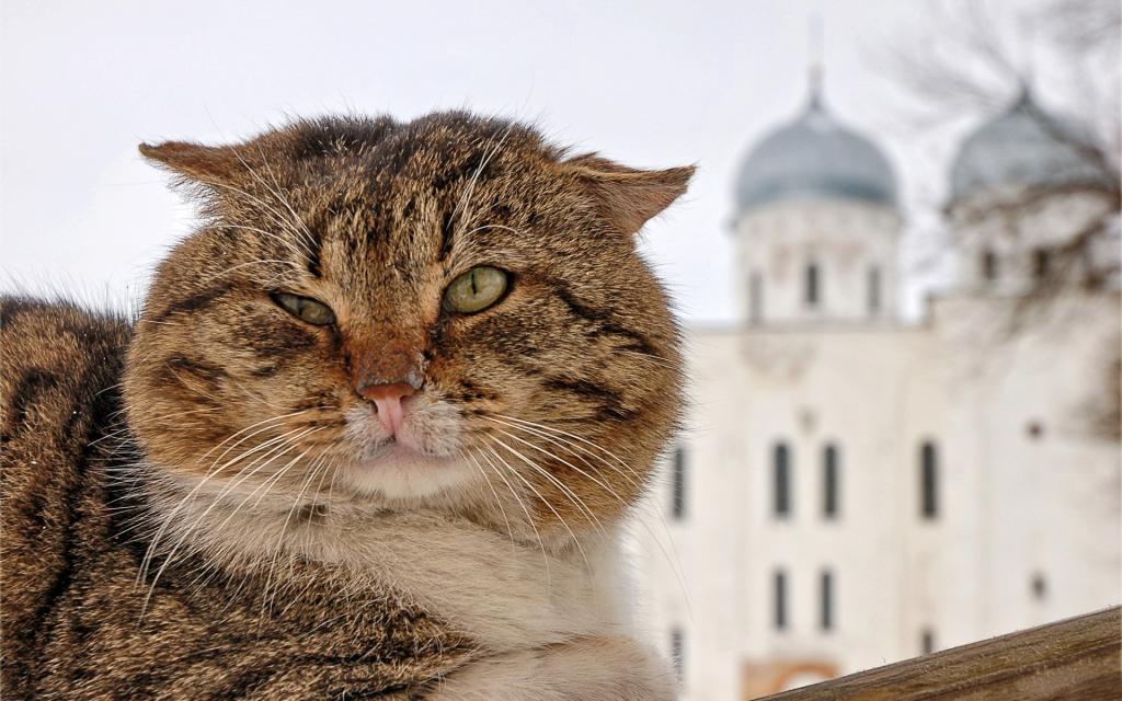 Поблажки для котов: почему кошек пускают в церковь, а собак — нет