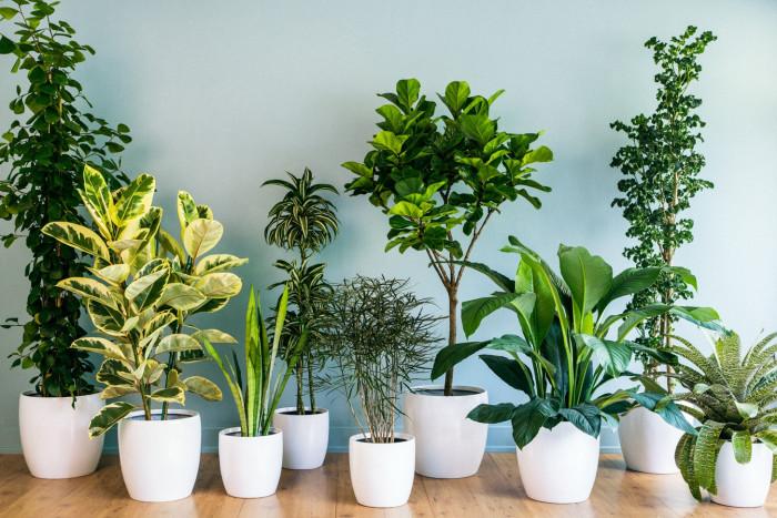 Растения от простуды