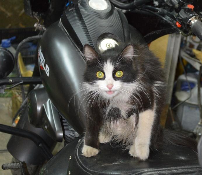 Кошка по прозвищу Колбаса