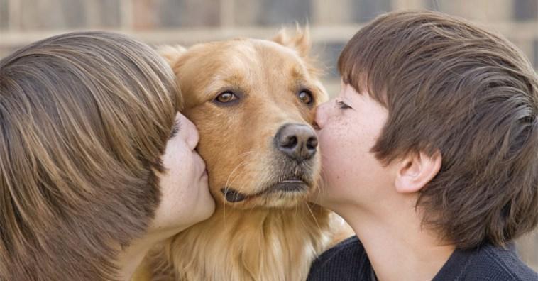 6 заболеваний, которыми человек может заразиться от домашних животных