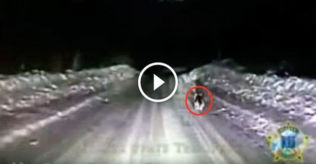 Полицейские заметили ночью гавкающую собаку и решили поехать за ней