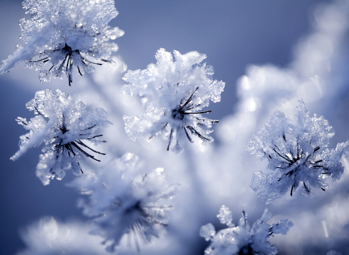 Цветник: сезонные работы в декабре