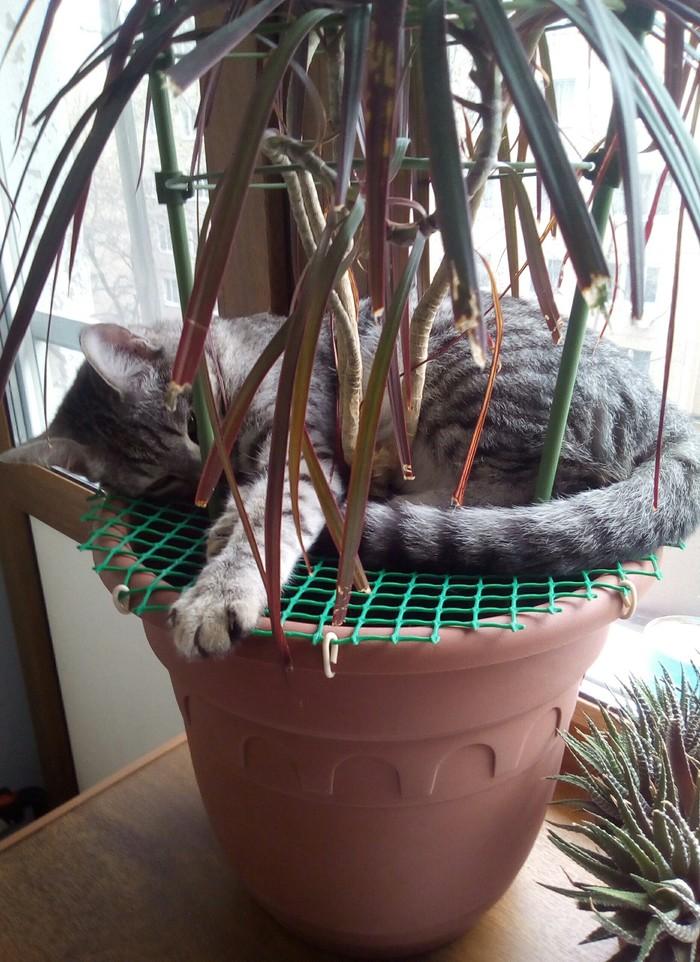 Защита от кота