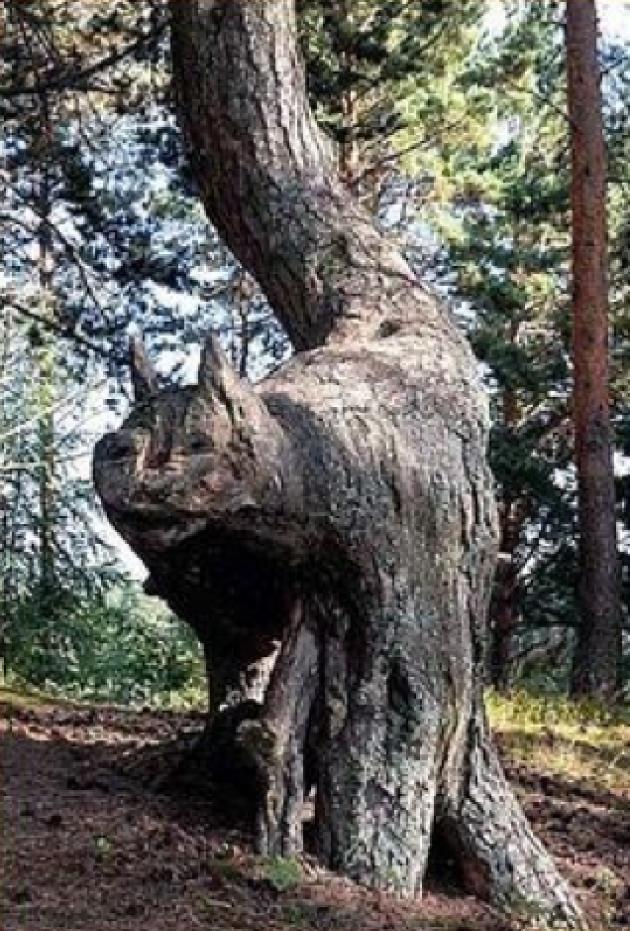 Гамак на дерево 127